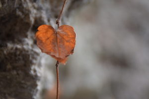 winter-leaf