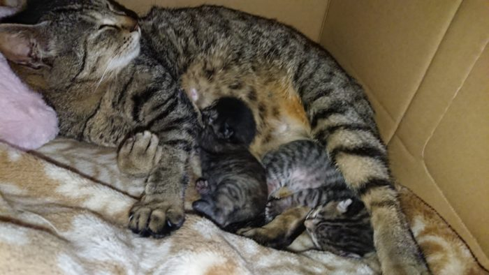 mother-cat-Kitty