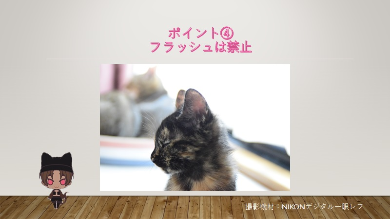 cats-photo4