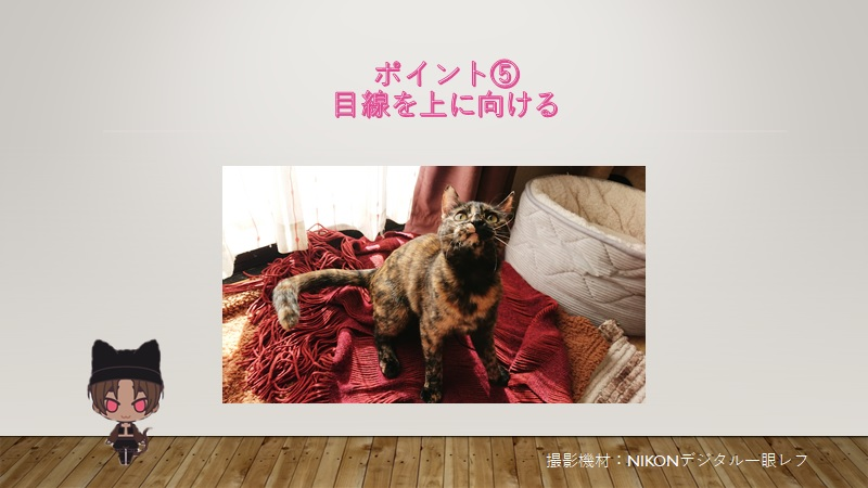cats-photo5