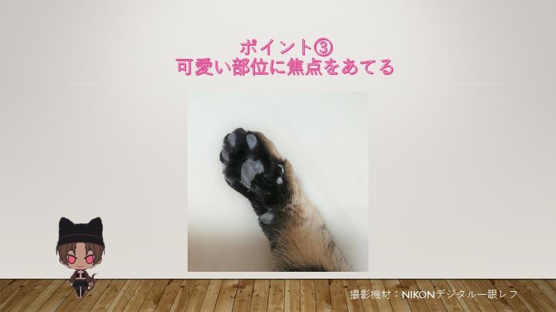 cats-photo3