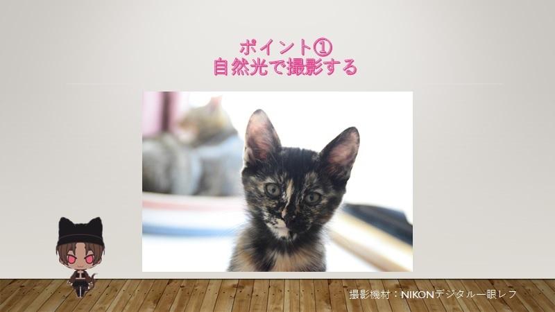 cats-photo1