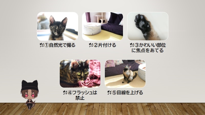 cats-photo